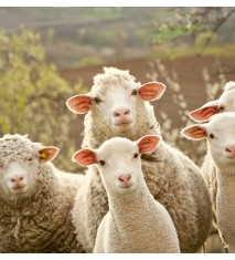 Descubre la vida en la granja (Huesca)