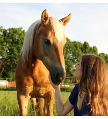 Clase de equitación para cuatro