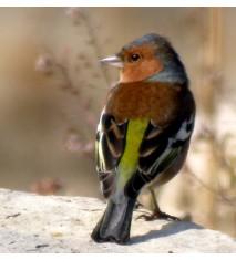 Descubriendo pájaros