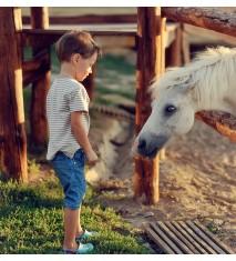 Aventura a caballo por el bosque