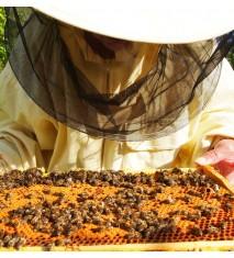 Descubre el fascinante mundo de las abejas en familia