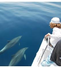 Ruta de los delfines de Cadaqués