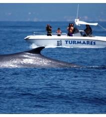 Ballenas y delfines en el Estrecho de Gibraltar