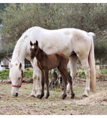 Aprende a montar a caballo en el Valle de Tiétar