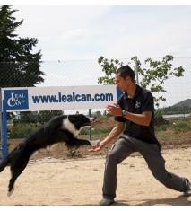 Curso de habilidades caninas