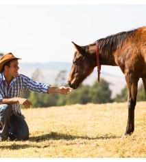 El mundo de los caballos (Palencia)