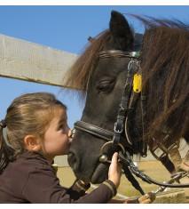 El mundo de los caballos (Salamanca)