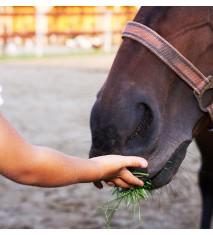 El mundo de los caballos (Burgos)