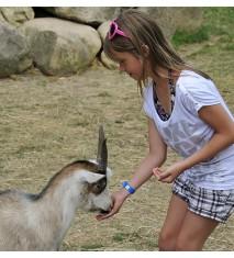 Descubre la vida en la granja (Asturias)