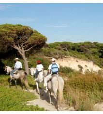 Clases de equitación o rutas a caballo