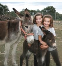 Casa Rural Los Huetos + Visita a la granja y paseo en burro