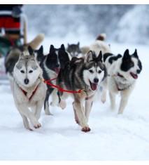 Paseo en trineo de perros + snowtubing
