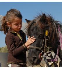 El mundo de los caballos (Tenerife)