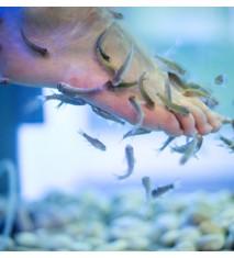 Fish Pedicure Scentsations (Valencia - Centro)