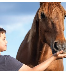 El mundo de los caballos (Vizcaya)