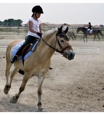 El mundo de los caballos (Córdoba)