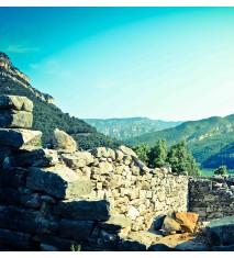 El Castillo de Aín y los habitantes del bosque